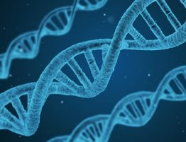 Molécule d''ADN